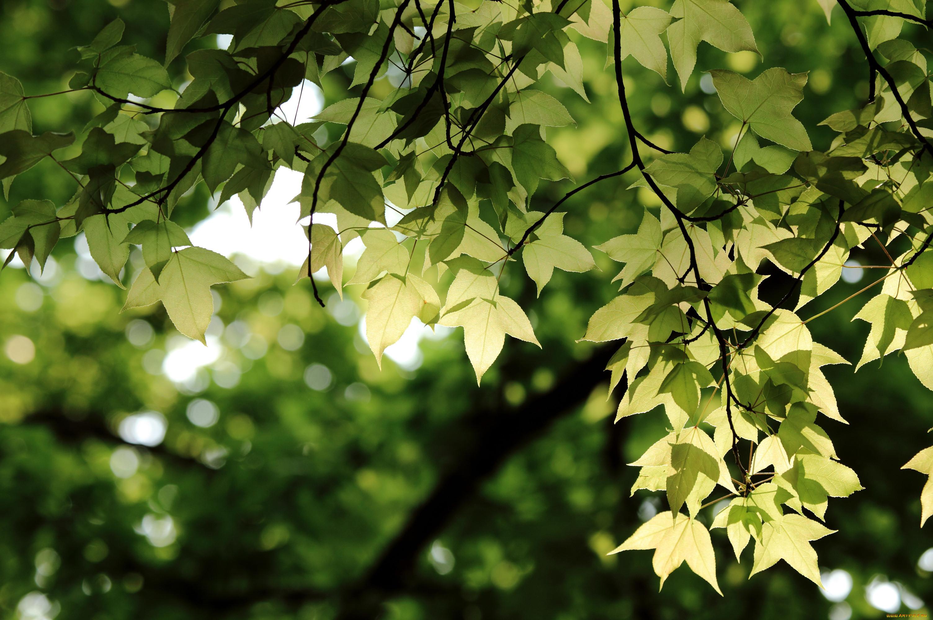 картинки природа листочки сторона творений